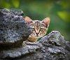 -cat-645d1895-copy.jpg