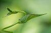 -macro-leaf-study-12-s.jpg