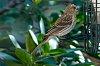 -07-22-2015-birds-001.jpg