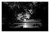-mangrove-sunrise-bw.jpg