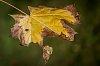 -autumns-pallette.jpg