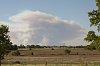 -wildfire-smitville-plum-3039.jpg
