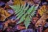 -fall-fern-smug-lr-tpza-101915.jpg