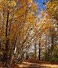 -autumn4.jpg
