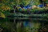 -blue-woods.jpg