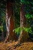 -redwoods.jpg