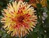 -09-08-2015-als-garden-011.jpg