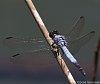 -2015-10-31-dragonfly-027_1.jpg