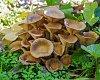 -mushroom-colony-helens-7.jpg