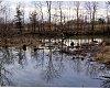 -wetlands1213a.jpg