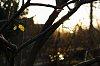 -fall-9705.jpg
