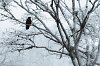 -hoar-frost-resized_1100.jpg