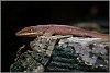 -chameleon.jpg