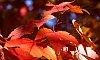 -remember-autumn.jpg