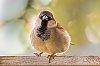 -bird-porch-lw-res-.jpg