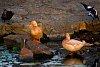 -duck400-2702-2.jpg