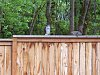 -04afc096-163-hawk-squirrel.jpg