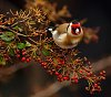 -little-bird-1.jpg