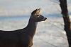 -spring-2016-deer-birds-57.jpg