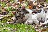 -feral-cat-2.jpg