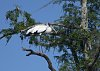 -wood-stork2-3m.jpg