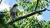 -hawk-branch-2.jpg