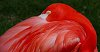 -flamingo.jpg