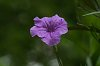 -flower-1ev_small.jpg