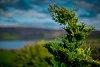 -tormented-green-tree.jpg
