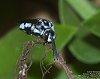 -2016-05-01-cuckoo-bee-sleeping-1528.jpg