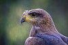 -little-eagle-1.jpg