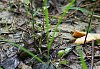 -green-frog-052116.jpg