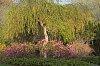 -garden-noank-baptist.jpg
