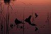 -6774-sunset-kenni-res.jpg