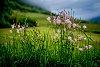 -kerrowdown-meadow.jpg
