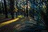 -forest-glade-1.jpg