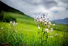 -kerrowdown-meadow-ii.jpg
