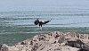 -spread-eagle.jpg