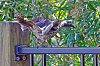 -bird0707-2.jpg