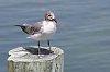 -seagull1.jpg