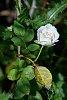 -flowers-2.jpg