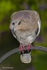 -dove-curious-four-low-0236.jpg