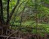 -monhegan-stream-cathedral-path-14.09.jpg