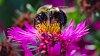 -bee-flower-2.jpg