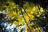 -relective-autumn.jpg