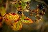 -autumn-berries.jpg