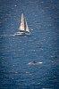 -yacht-whale.jpg