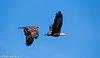 -eagle-formation.jpg