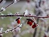 -morning-frost.jpg