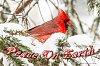 -march-5-2015-snowbirds-015.jpg